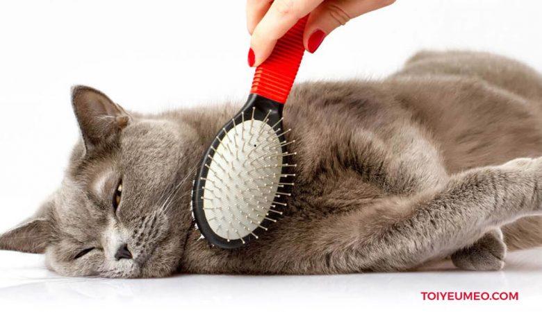 Bàn chải lông mèo