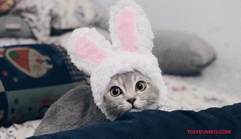 Tai thỏ cho mèo